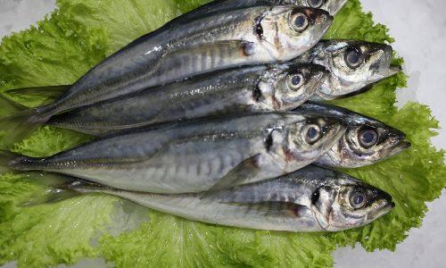 Livraison de poissons • Poissonnerie • Restaurant • Traiteur à Anderlecht
