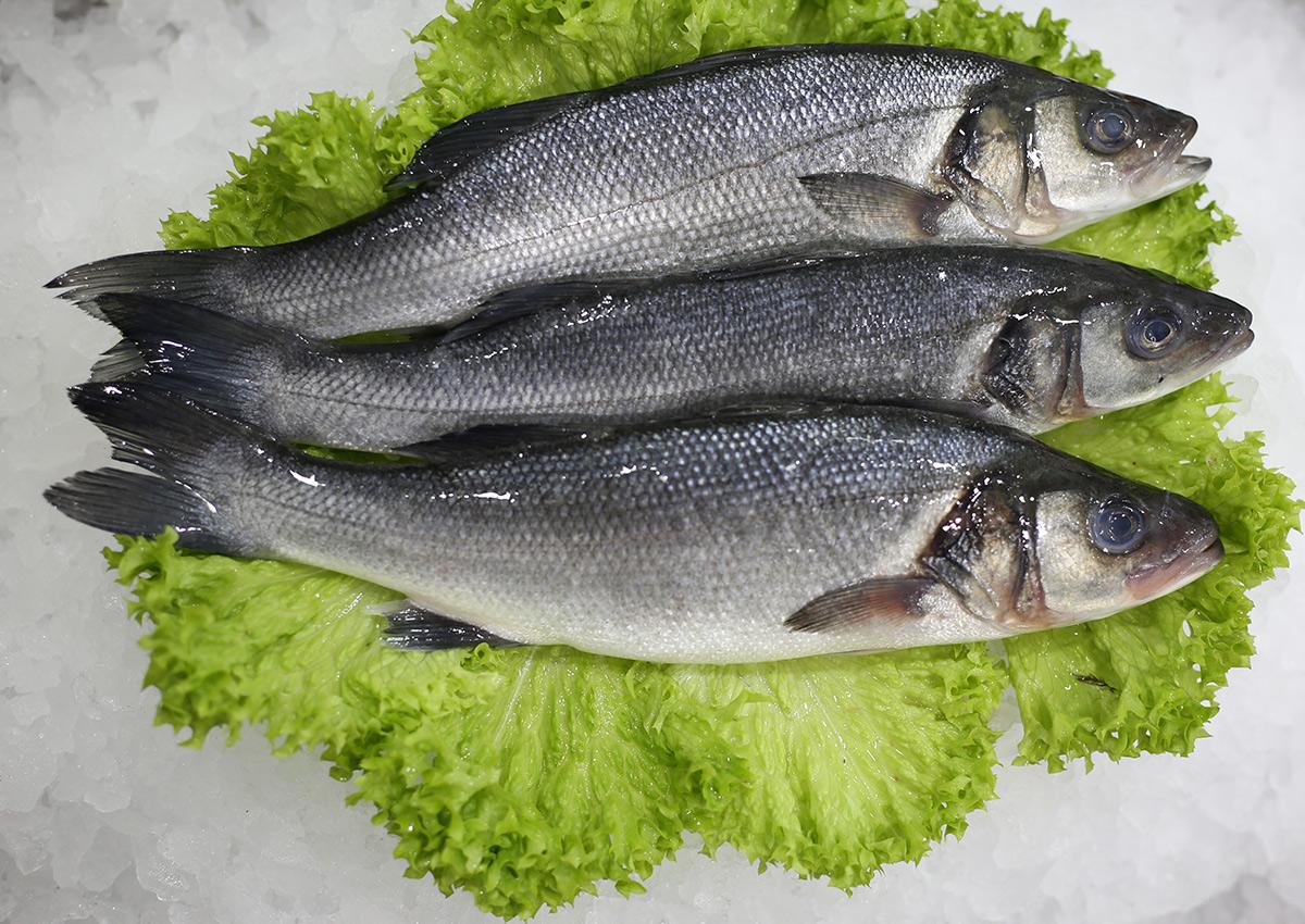 Bar d'élevage | Livraison de poissons • Poissonnerie • Restaurant • Traiteur à Anderlecht
