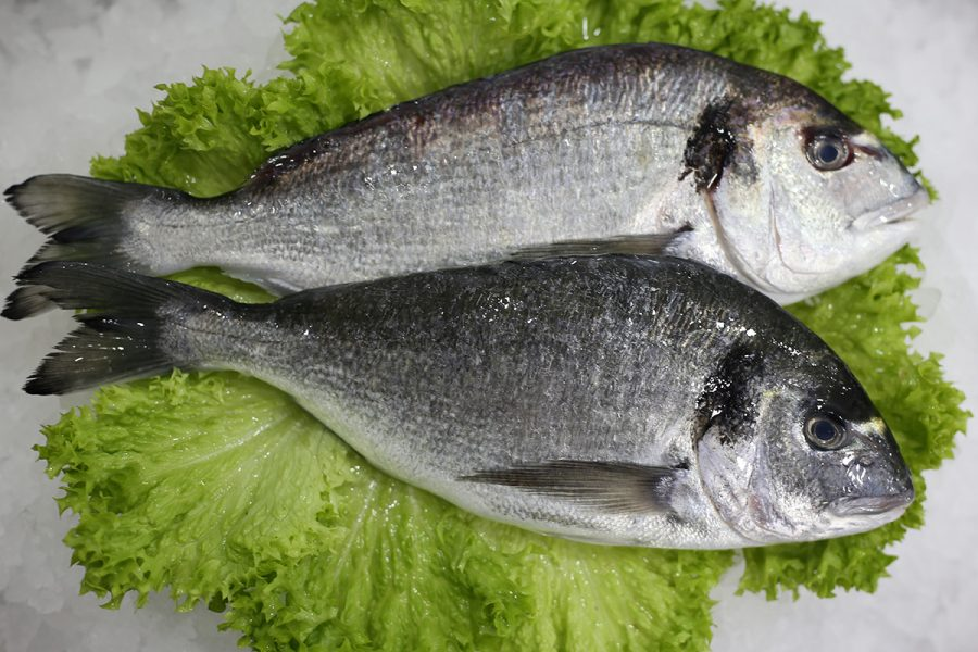 Dorade royal d'élevage   Livraison de poissons • Poissonnerie • Restaurant • Traiteur à Anderlecht