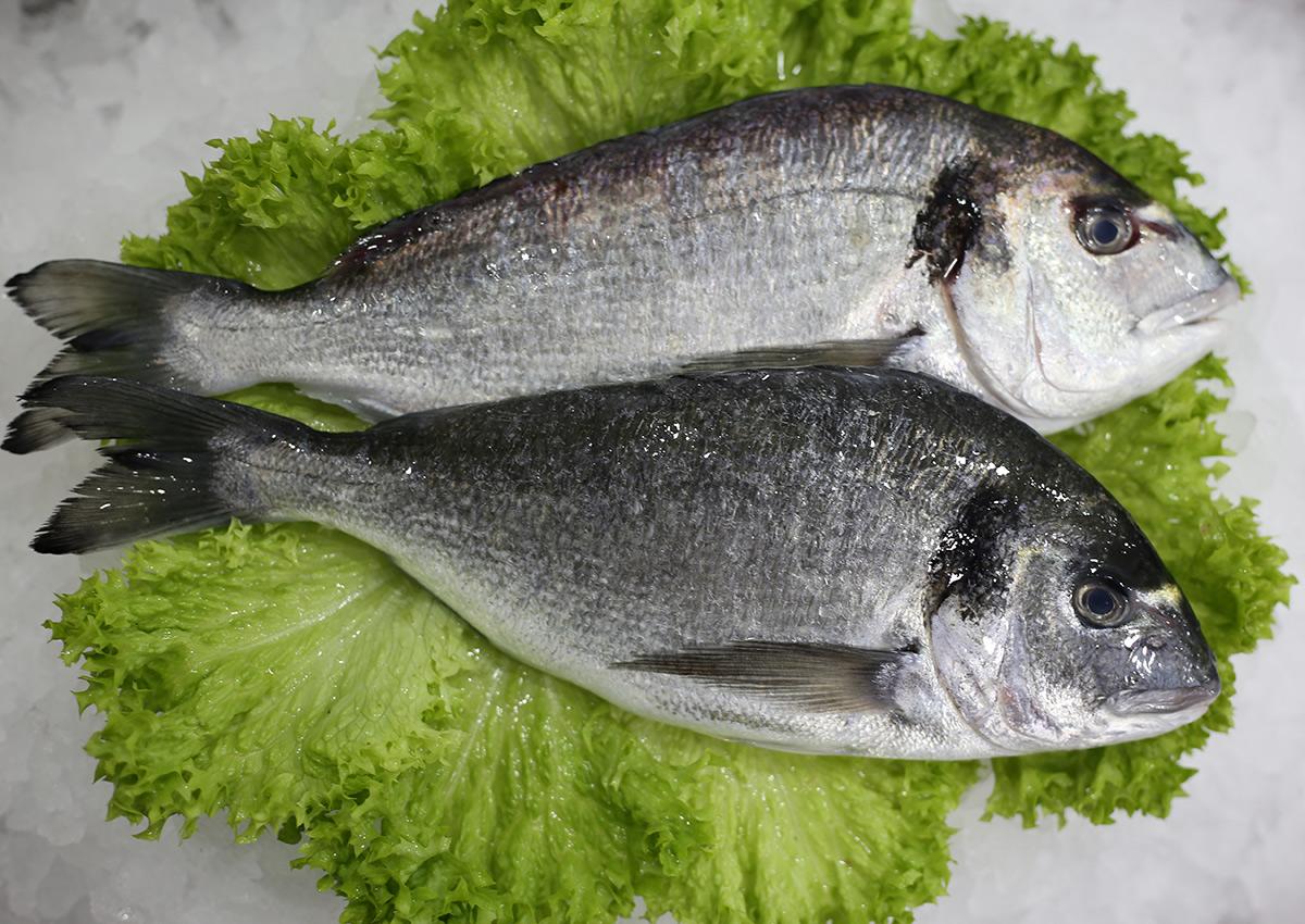 Dorade royal d'élevage | Livraison de poissons • Poissonnerie • Restaurant • Traiteur à Anderlecht