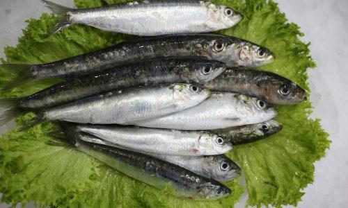 Sardinne | Livraison de poissons • Poissonnerie • Restaurant • Traiteur à Anderlecht