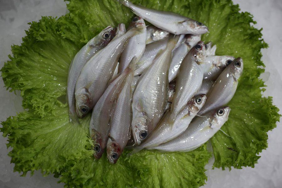 Capelan | Livraison de poissons • Poissonnerie • Restaurant • Traiteur à Anderlecht