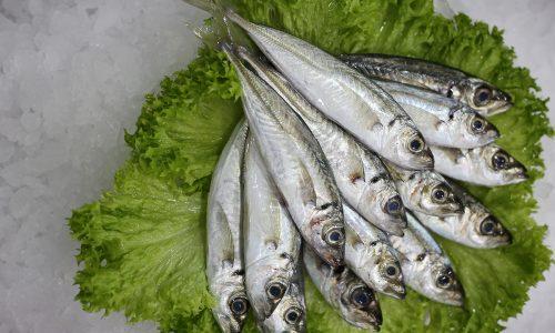 Chinchard p (petit) | Livraison de poissons • Poissonnerie • Restaurant • Traiteur à Anderlecht