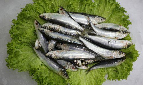 Petite sardinne | Livraison de poissons • Poissonnerie • Restaurant • Traiteur à Anderlecht