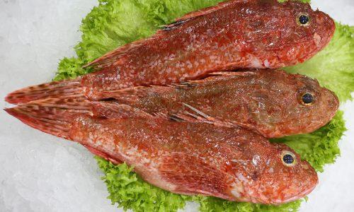 Le sébaste | Livraison de poissons • Poissonnerie • Restaurant • Traiteur à Anderlecht