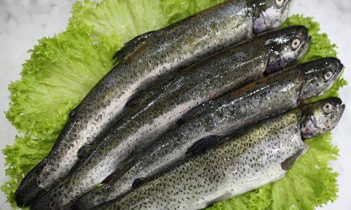 Truite | Livraison de poissons • Poissonnerie • Restaurant • Traiteur à Anderlecht