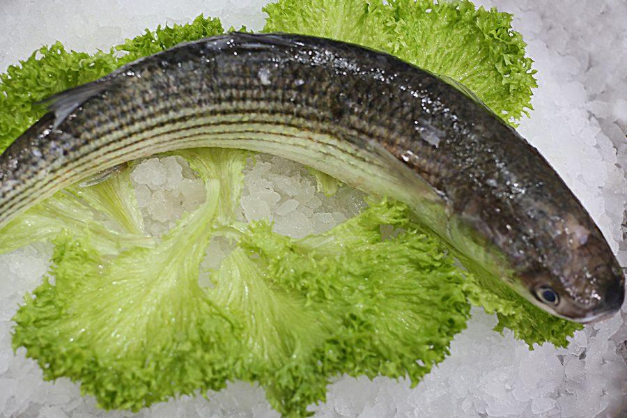 Mulet   Livraison de poissons • Poissonnerie • Restaurant • Traiteur à Anderlecht