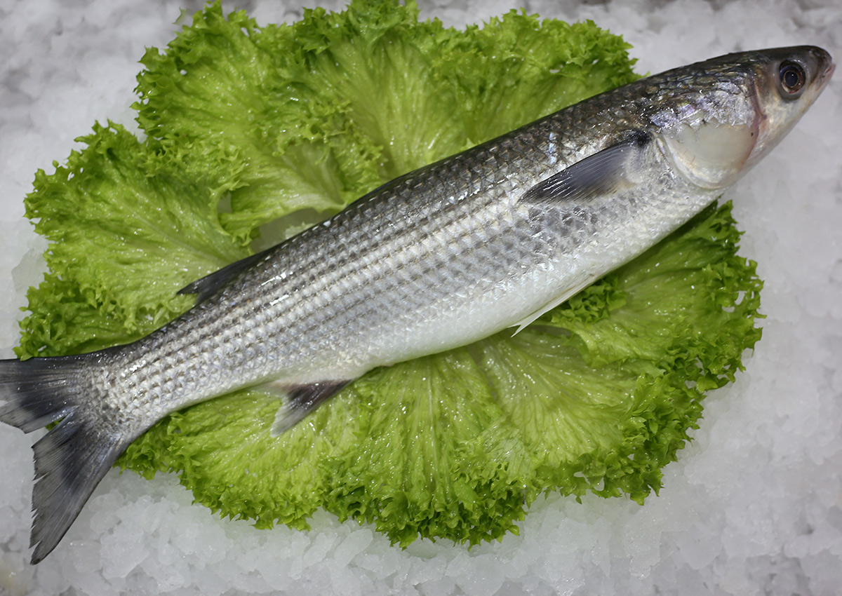 Mulet | Livraison de poissons • Poissonnerie • Restaurant • Traiteur à Anderlecht