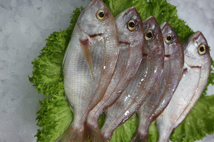 Pageot | Livraison de poissons • Poissonnerie • Restaurant • Traiteur à Anderlecht
