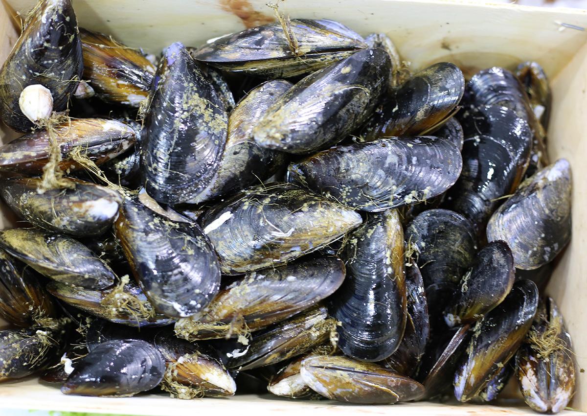 Moule d'Espagne | Livraison de poissons • Poissonnerie • Restaurant • Traiteur à Anderlecht