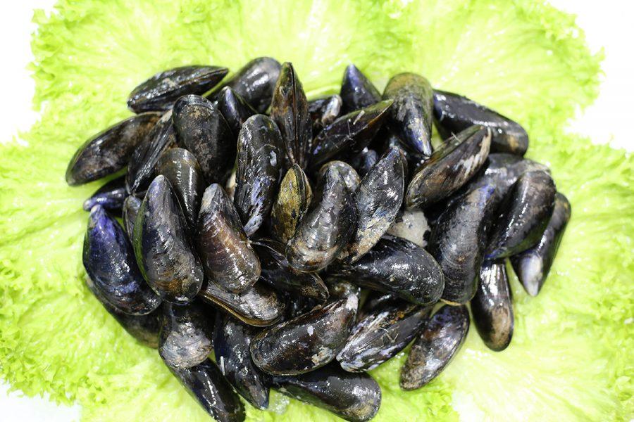 Moule jumbo | Livraison de poissons • Poissonnerie • Restaurant • Traiteur à Anderlecht