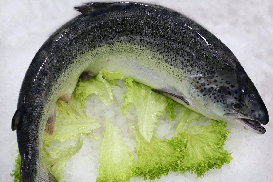 Saumon   Livraison de poissons • Poissonnerie • Restaurant • Traiteur à Anderlecht
