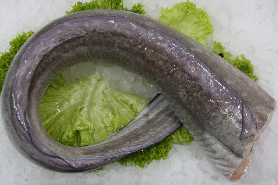 Le congre |Livraison de poissons • Poissonnerie • Restaurant • Traiteur à Anderlecht