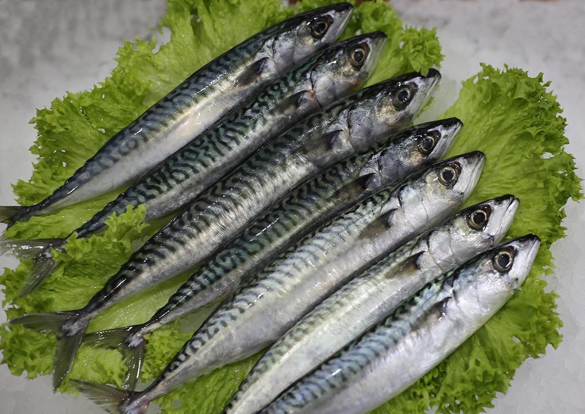 Maquereau | Livraison de poissons • Poissonnerie • Restaurant • Traiteur à Anderlecht
