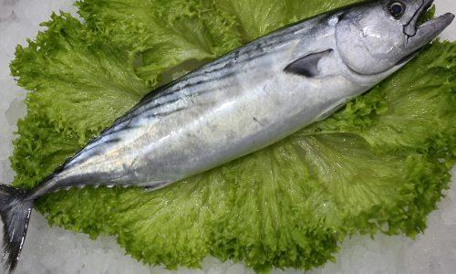 Bonite | Livraison de poissons • Poissonnerie • Restaurant • Traiteur à Anderlecht