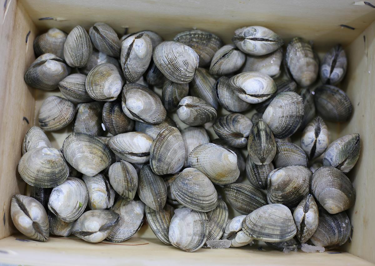 Palourdes | Livraison de poissons • Poissonnerie • Restaurant • Traiteur à Anderlecht