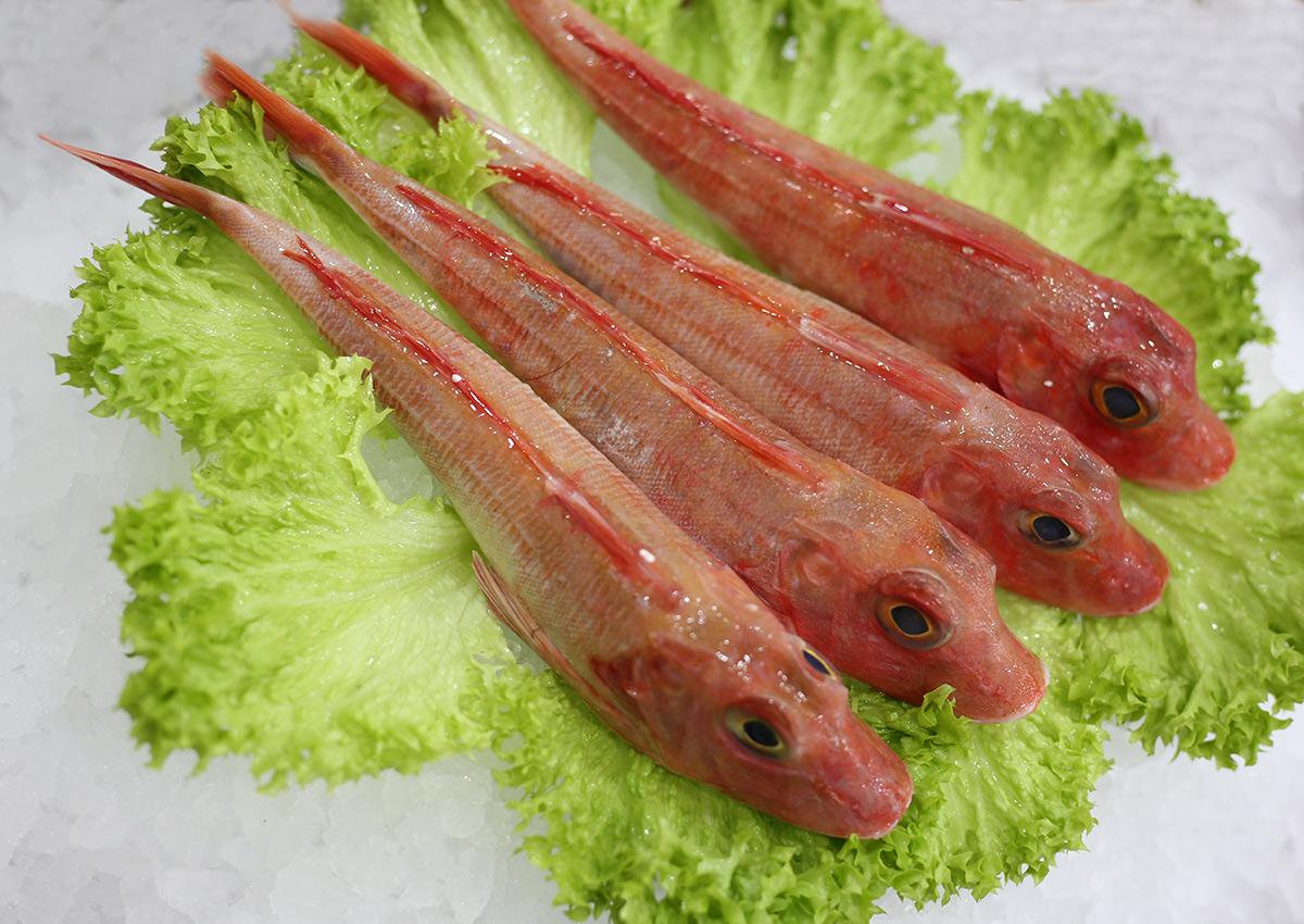 Rouget grondin | Livraison de poissons • Poissonnerie • Restaurant • Traiteur à Anderlecht