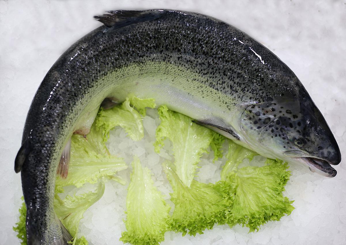 Saumon | Livraison de poissons • Poissonnerie • Restaurant • Traiteur à Anderlecht